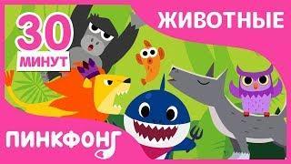 Акулёнок и другие песни | Песни про Животных | + Сборники | Пинкфонг Песни для Детей