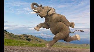 Удивительный слон | Веселые детские песни