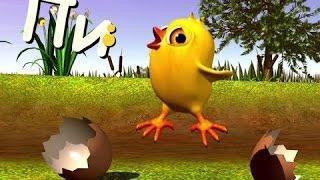 Цыплёнок Пи - детские песни Детское Королевство