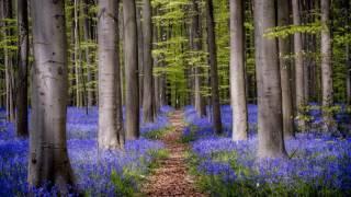 БЕТХОВЕН Музыка Классическая Музыка для Расслабления и Отдыха Музыка и Шум Дождя