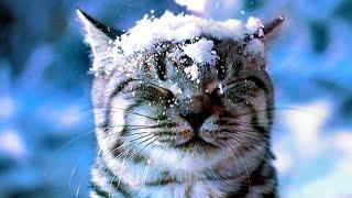 СЕРЕБРИСТЫЕ СНЕЖИНКИ ❆ Новогодние песни