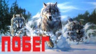 Владимир Лисицын Побег (Студия Шура) клипы шансон