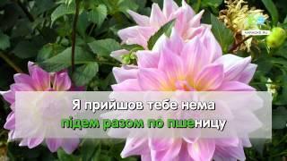 Ти ж мене пiдманула - Украинская народная (karaoke)