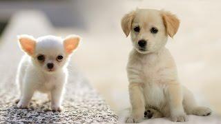 Раз собака, два собака Веселый клип про собак - детская песня